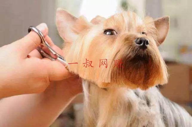 """宠物一年消费超 5000 元!""""宠物经济""""到底有多赚钱?_ 赚钱插图2"""