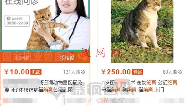 赚钱 _ 养宠物赚钱吗,关于宠物的赚钱项目有哪些插图4